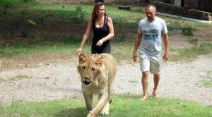 La Generalitat estudia si la família va dur l'animal per una zona on no podia estar