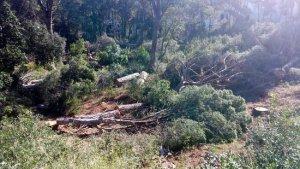 La tala d'arbres a Palafrugell