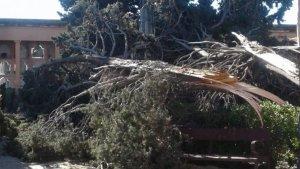 Arbre caigut al cementiri de Torredembarra pel fort vent