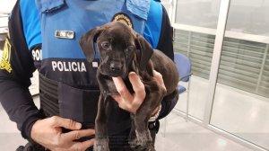 Un gos abandonat troba família gràcies a la Policia Local de Sitges