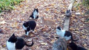 Colònia de gats