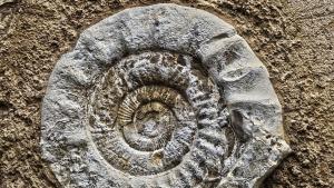 Imatge del fòssil trobat a Yorkshire
