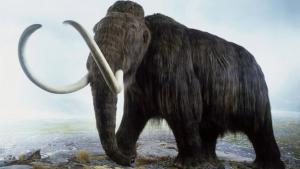 Els mamuts van viure fa milers d'anys a la Terra