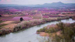 Imatge dels camps de fruiters, florits, a la Ribera d'Ebre