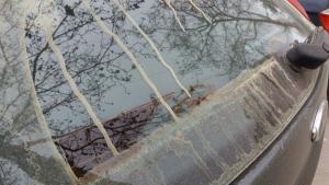 Restes de pol·len arrossegat per la pluja a Gavà