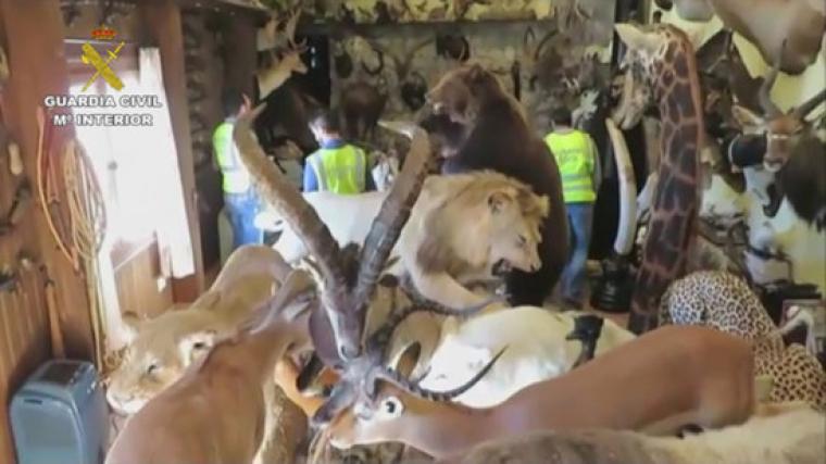 Animals dissecats intervinguts per la Guàrdia Civil