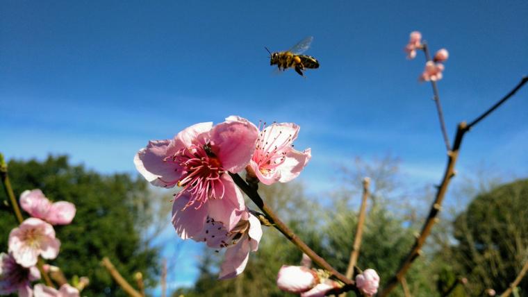 Dijous primaveral a Vallgorguina