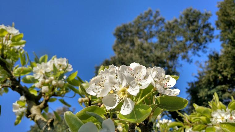 Ambient primaveral divendres al Vallès