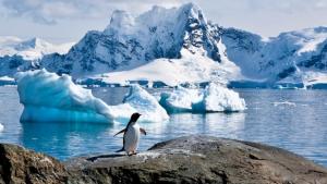 El trencament de gel a l'Antàrtida està causant un desastre entre els pingüins