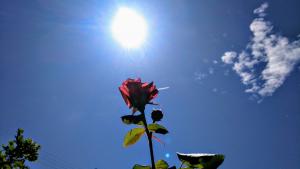 Aquest divendres va fer un dia calorós i es van superar per primera vegada els 30ºC a Tarragona