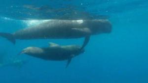 Els cetacis vist des de sota l'aigua