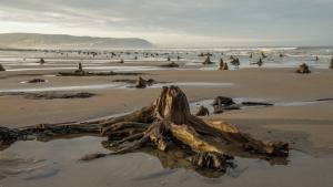 Una altra imatge del bosc ressorgit a Gal·les