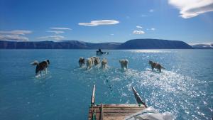 La impactant imatge que confirma el greu desgel a Groenlàndia