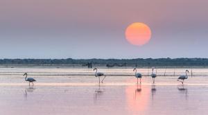 Sortida de sol aquest matí de divendres tòrrid al Delta de l'Ebre