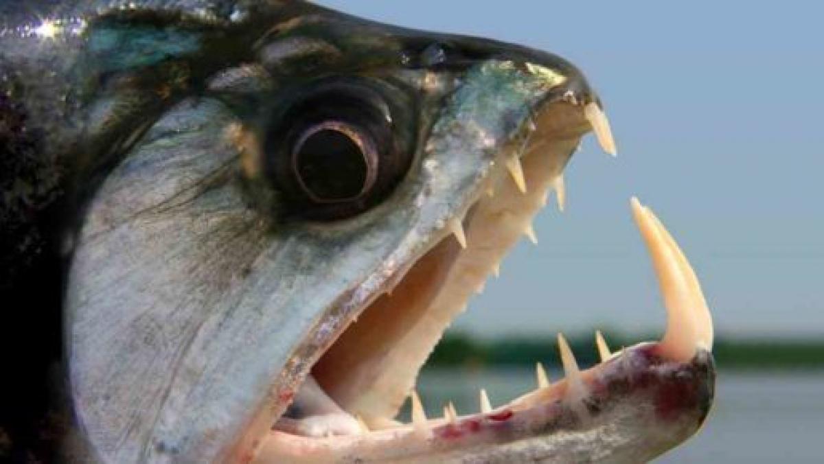 Un peix desconegut ja ha atacat dos menors al Mediterrani