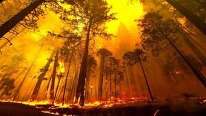Els incendis han cremat més de 5.000 hectàrees aquest estiu a Catalunya