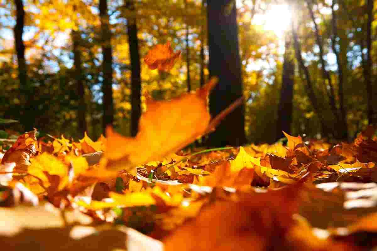 Imatge d'un bosc amb les fulles recent caigudes per l'arribada de la tardor