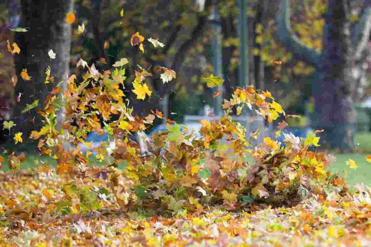 Imatge d'unes fulles de tardor empeses pel vent