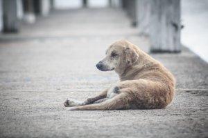 gos abandonat