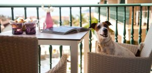 hotel gossos