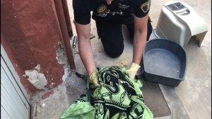 Rescatat un gat atrapat en una canonada i que havia estat copejat per un home amb un tornavís a Alboraia