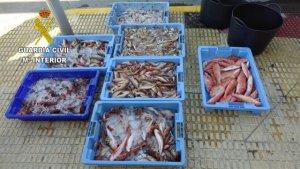 Peix que es venia de forma il·legal