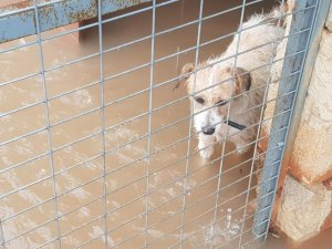 Imatge d'un dels gossos