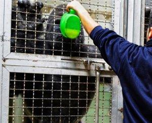 Així combaten el fred els animals de Bioparc: amb caldos calents, brasers o radiadors