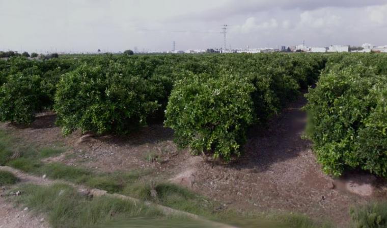 Imatge de camps de cultiu a Foios
