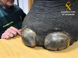 La pata de l'elefant que estava a la venda