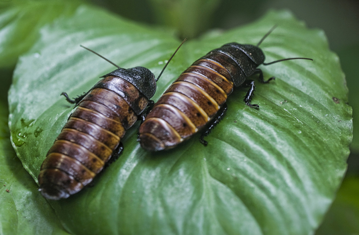 What Does It Mean to Dream About Cockroaches? Discover Its Meaning