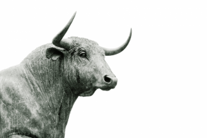 Find out more about the bull dream meaning in our Dream Dictionary