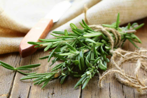 Rosemary has antiseptic properties and is attributed a sacred dimension.