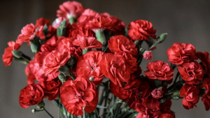 Discover the properties of carnation, the magic plant of strength.