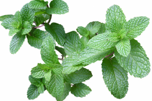 Discover the properties of mint, the magic plant that drives away bad energies.