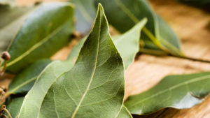 Laurel is an ancestral and sacred leaf with magical and medicinal properties.