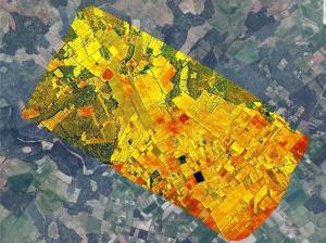 Imatges aèrees per la quantificació d'indicadors de la malaltia per a cadascun dels milers d'arbres escanejats