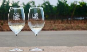 Una imatge que identificarà a partir d'ara el producte emparat per l'IGP Vi de la Terra Mallorca