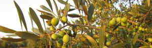 Olives d'Eivissa