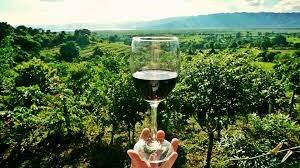 Vinya i copa de vi