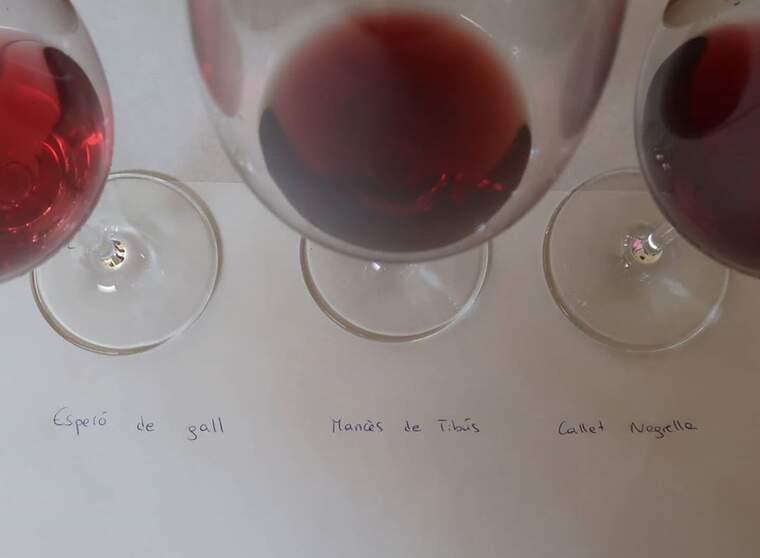 El tast és una de les últimes fases per autoritzar noves varietats