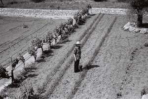 """""""I per molts anys"""", de Maria Catalina Marí ha estat la guanyadora en la categoría d'Agricultura i mostra una dona enmig d'una vinya ."""