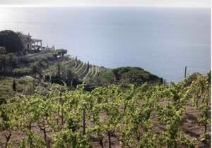 Vi de la Terra Mallorca promou el seu consum