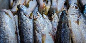 Uno de cada tres pescados que se consumen en España están infectados con anisakis