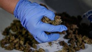 Imagen de archivo de marihuana incautada por la policia