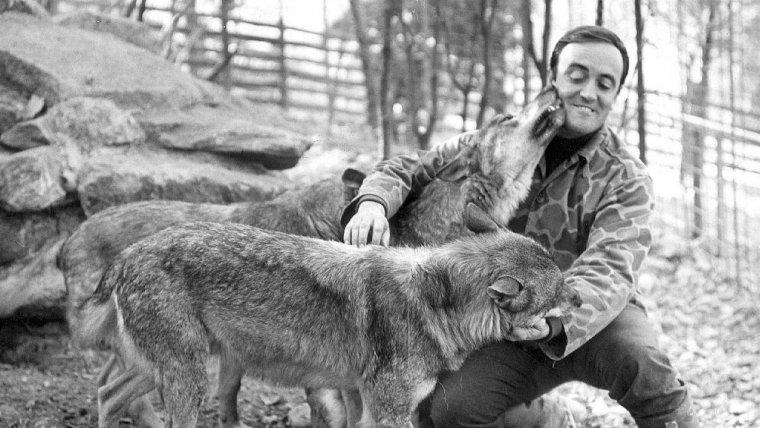 Félix Rodríguez de la Fuente junto a unos lobos