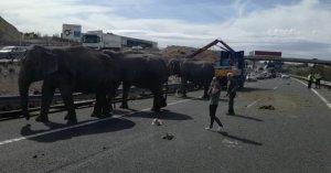 Imagen de los elefantes en la carretera.