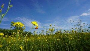 El sol y el calor serán los protagonistas en gran parte del país