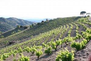 Vinyes de Terroir al Límit