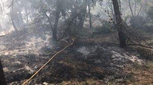 L'incendi de Llorac ha calcinat 550 metres quadrats.